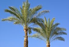 Free Date Palm Leaves Stock Image - 6474911