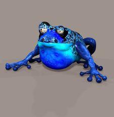 Free Frog Stock Photo - 6475160
