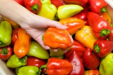 Free Peppers Royalty Free Stock Photos - 6475258