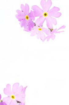 Free Purple Flowers Stock Image - 6476081