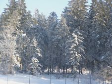 Free Winter Forest Stock Photography - 6476262