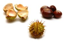 Chestnuts Isolated On A White Background Stock Image