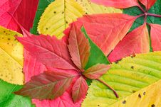Free Autumn Background Stock Photo - 6476860