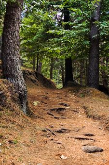 Free Path In The Wood Royalty Free Stock Photography - 6477017