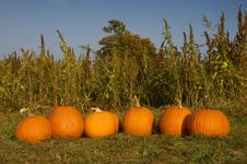 Free Pumpkins In A Row Stock Photography - 6477122