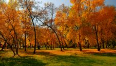 Free Autumn Stock Images - 6477544