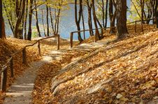Free Autumn Park Royalty Free Stock Photo - 6478185