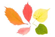 Free Colorful Leaves Stock Images - 6478294