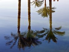 Free Palm Tree Reflections Stock Image - 6479401