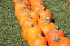 Free Pumpkin Field Royalty Free Stock Photography - 6479407