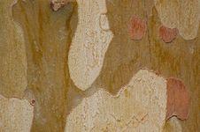 Free Tamarind Tree Bark (close Up) Stock Photo - 6479410