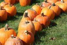 Free Pumpkin Field Stock Image - 6479421