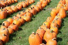 Free Pumpkin Field Stock Photos - 6479423