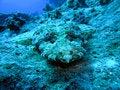Free Head Of Crocodile Fish, Red Sea Stock Photography - 6480742