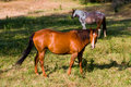 Free Horses Stock Photography - 6483162
