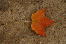 Free Lone Leaf Stock Images - 6480264