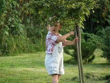 Free Boy Under Tree Royalty Free Stock Photography - 6480357