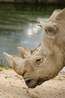 Free Rhinoceros Royalty Free Stock Photography - 6480657