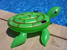 Summer Turtle Royalty Free Stock Photography
