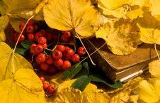 Free Autumn Subject Royalty Free Stock Photography - 6481307