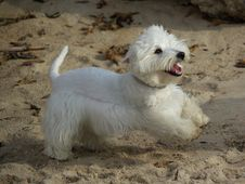 Free Funny Running Dog At Beach Stock Photography - 6481312