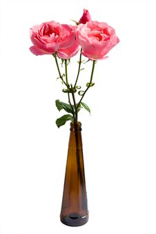 Free Roses In A Bottle Stock Photos - 6481343