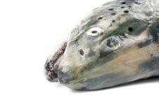 Free Fresh Salmon Stock Photo - 6482690