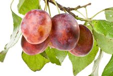 Free Fresh Appetizing Plums Royalty Free Stock Photos - 6482718