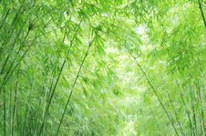 Free The Verdure Bamboo Background Stock Images - 6482754