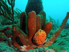 Free Tube Sponge Stock Photos - 6484013
