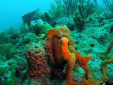 Free Tube Sponge Royalty Free Stock Image - 6484016