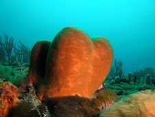 Free Brown Tube Sponge Stock Image - 6484021