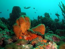 Free Brown Tube Sponge Royalty Free Stock Photo - 6484025