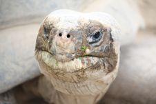 Free Tortoise Royalty Free Stock Image - 6484346