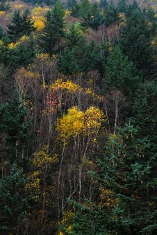 Free Autumn Forest Royalty Free Stock Photography - 6484407