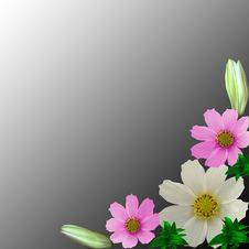 Free Flowers Royalty Free Stock Images - 6484739