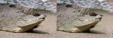 Blinking Eye Crocodile Stock Photo