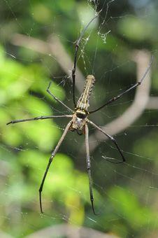 Free Big Spider And Web In The Park Stock Photo - 6485280