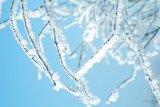 Free Tree In Snow Stock Photo - 6486090