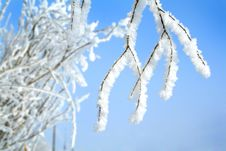 Free Tree In Snow Royalty Free Stock Photos - 6486218