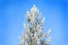 Free Frozen Tree Stock Images - 6486344