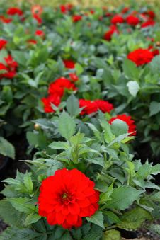 Free Blooming Wonderful 5 Royalty Free Stock Images - 6486859