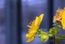 Blooming Wonderful 7 Stock Photo