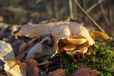 Autumn Mushrooms Stock Images
