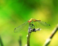 Free Dragonfly. Stock Photos - 6487333