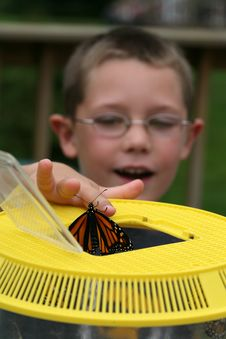 Free Young Boy With A Butterfly Royalty Free Stock Image - 6488856