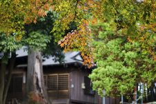 Free Autumn In Japan Royalty Free Stock Images - 6489049