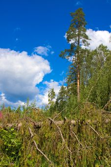 Free Northland Country Landscape Royalty Free Stock Photography - 6489357