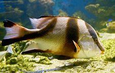 Free Tropical Fish 29 Stock Image - 6489711