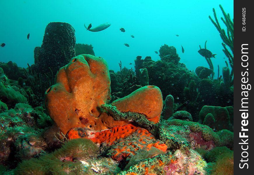 Brown Tube Sponge